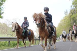 pferde wagen 2t küpper