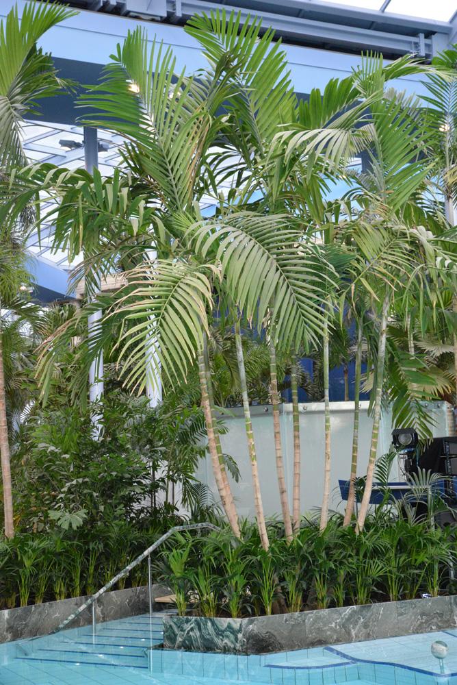paradies unter palmen euskirchen