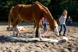 Herbst- und Reitermarkt Satzvey001