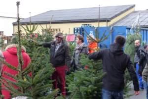 NEW_Weihnachtsbaumverkauf