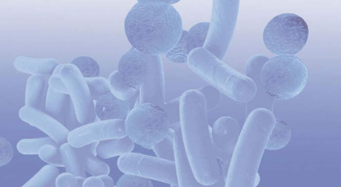 Bakteriencover_web