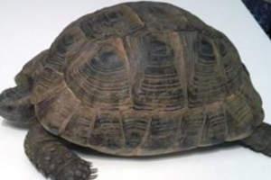 Web_071-Schildkröte-Karli