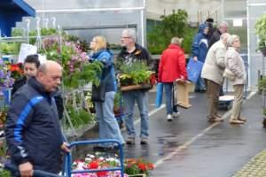NEW_Geranienmarkt